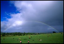 Rainbow over grassy cemetery. Maui, Hawaii, USA