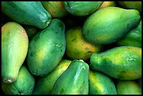 Green Papayas. Maui, Hawaii, USA (color)