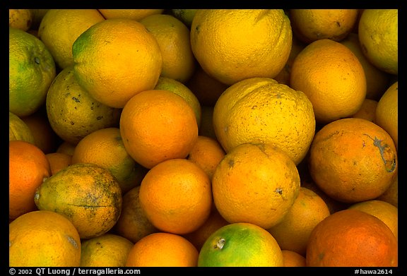Oranges. Maui, Hawaii, USA (color)