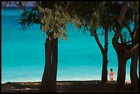 Turquoise waters and woman seen through Horsetail Ironwoods (Casuarina equisetifolia) at Waimanalo Beach. Oahu island, Hawaii, USA ( color)