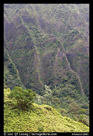 Hillside and Pali. Oahu island, Hawaii, USA (color)
