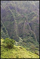 Hillside and Pali. Oahu island, Hawaii, USA