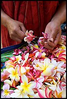 Hands preparing a fresh flower lei, International Marketplace. Waikiki, Honolulu, Oahu island, Hawaii, USA ( color)