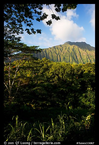 Tropical forest and  Koolau Mountains. Oahu island, Hawaii, USA (color)