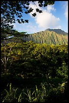 Tropical forest and  Koolau Mountains. Oahu island, Hawaii, USA