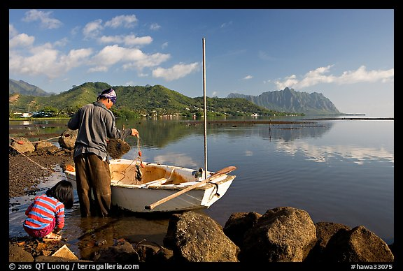 Fisherman pulling out fish out a net as girllooks, Kaneohe Bay, morning. Oahu island, Hawaii, USA