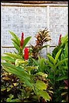 Wild ginger flower and wall of hut. Polynesian Cultural Center, Oahu island, Hawaii, USA