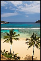 Palm trees and beach with no people, Hanauma Bay. Oahu island, Hawaii, USA (color)