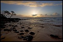 Windblown trees, boulders, and clouds, Lydgate Park, sunrise. Kauai island, Hawaii, USA ( color)