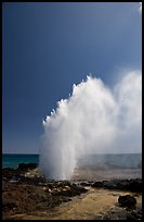 Stream of water shooting up from blowhole. Kauai island, Hawaii, USA ( color)