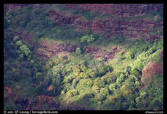 Treees, Waimea Canyon, afternoon. Kauai island, Hawaii, USA (color)