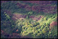 Treees, Waimea Canyon, afternoon. Kauai island, Hawaii, USA ( color)