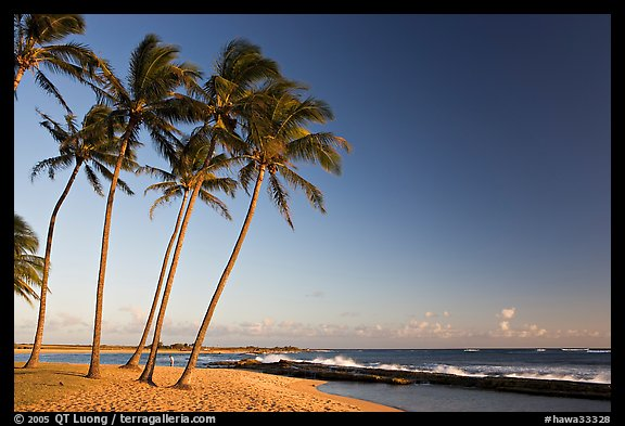 Palm trees and beach, Salt Pond Beach, late afternoon. Kauai island, Hawaii, USA (color)