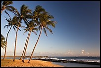 Palm trees and beach, Salt Pond Beach, late afternoon. Kauai island, Hawaii, USA