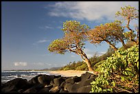 Boulders, trees, and beach, Lydgate Park, early morning. Kauai island, Hawaii, USA