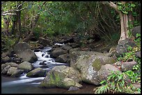 Stream, Haena beach park. North shore, Kauai island, Hawaii, USA