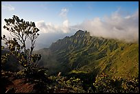 Kalalau Valley and tree, from the Pihea Trail, late afternoon. Kauai island, Hawaii, USA (color)
