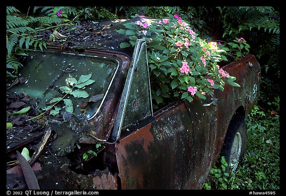 Rusted  truck colonised by flowers. Maui, Hawaii, USA (color)