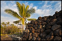 Heiau wall and palm tree, Kaloko-Honokohau National Historical Park. Hawaii, USA