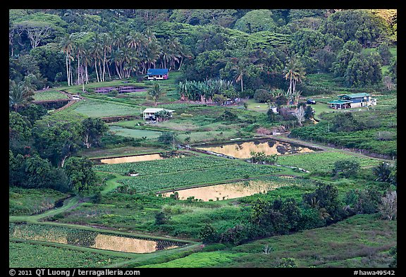 Taro fields and farms from above, Waipio Valley. Big Island, Hawaii, USA (color)