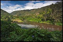 River, Waipio Valley. Big Island, Hawaii, USA ( color)