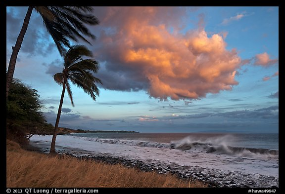 Palm trees, cloud, and ocean surf at sunset. Lahaina, Maui, Hawaii, USA (color)