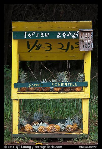 Self-serve fruit stand with pineapples. Maui, Hawaii, USA (color)