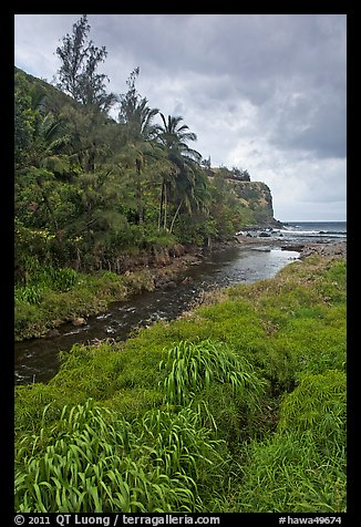 Creek, palm trees, and ocean. Maui, Hawaii, USA (color)