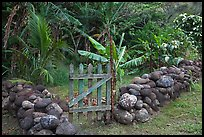 Tropical garden delimited by low stone walls. Maui, Hawaii, USA (color)
