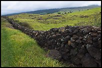 Long lava rock wall and pastures. Maui, Hawaii, USA ( color)