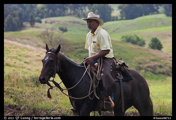Paniolo (Hawaiian cowboy). Maui, Hawaii, USA (color)