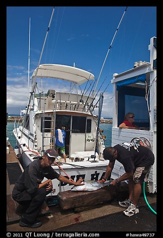 Men cutting fish caught in sport-fishing expedition. Lahaina, Maui, Hawaii, USA (color)