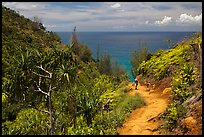 Hiking Kalalau trail. Kauai island, Hawaii, USA ( color)