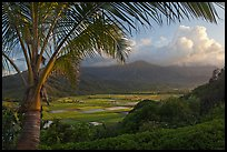 Hanalei Valley from above, sunset. Kauai island, Hawaii, USA ( color)