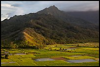 Taro paddy fields and mountains, Hanalei Valley. Kauai island, Hawaii, USA (color)