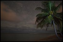 Palm tree, stars and ocean. Kauai island, Hawaii, USA ( color)