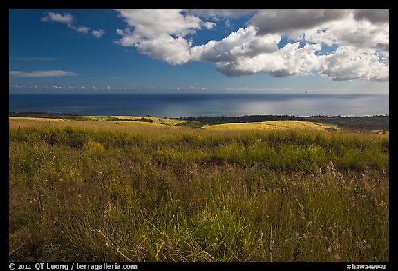 Grasses and ocean. Kauai island, Hawaii, USA (color)