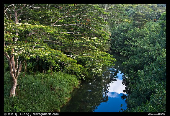 Stream and lush forest from above. Kauai island, Hawaii, USA (color)
