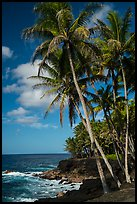 Puna coast. Big Island, Hawaii, USA ( color)