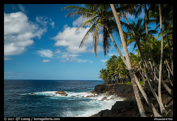 Palm trees and volcanic coastline, Puna. Big Island, Hawaii, USA (color)