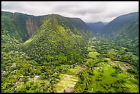 Aerial view of fields and steep slopes, Waipio Valley. Big Island, Hawaii, USA ( color)