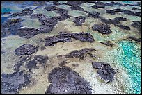 Aerial view of lava rocks and Kapoho tidepools. Big Island, Hawaii, USA ( color)