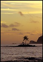 Coconut tree on islet, Leone Bay, sunset. Tutuila, American Samoa