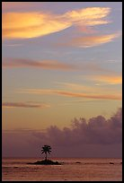 Lone coconut tree on a islet in Leone Bay, sunset. Tutuila, American Samoa