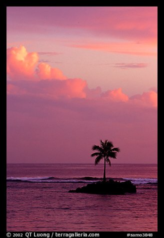 Lone palm tree on a islet in Leone Bay, sunset. Tutuila, American Samoa (color)