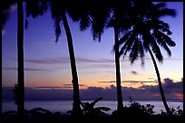 Palm trees at sunset, Leone Bay. Tutuila, American Samoa