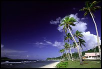 Palm-lined beach in village of Auasi. Tutuila, American Samoa