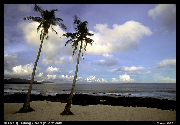 Palm trees at Coconut Point. Tutuila, American Samoa (color)