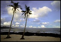 Palm trees at Coconut Point. Tutuila, American Samoa