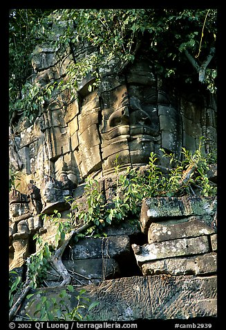 Stone face invaded by vegetation, Angkor Thom complex. Angkor, Cambodia (color)
